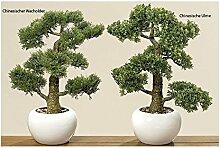 BZ Group Bonsai im Topf Chinesische Ulme H 48 cm