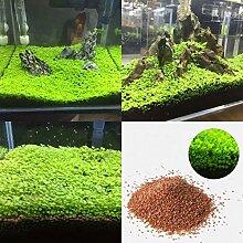 C-LARSS Aquarium Aquarium Pflanzensamen, Wasser