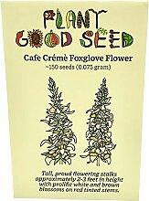 Café Crème Fingerhut Blume Samen (~ 150) von