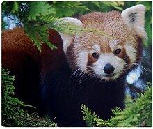 CafePress–Rot Panda–weicher Fleece Überwurf Decke, 127x 152,4cm Stadion Decke, weiß, 50x60