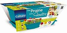 Caillard pfcw16678eine Prairie auf meinem