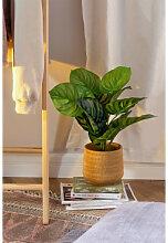 Calatea dekorative künstliche Pflanze ↑50 cm