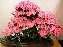 Calceolaria uniflora Samen 100PCS Aliens Blumensamen Garten DIY Bonsai Exotische Pflanze Blumensamen Einfache Anlage