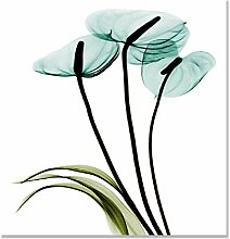 Calla Lilie Poster Orchidee Blumen Malerei Bilder
