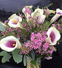 Calla Zwiebeln Blumen Im Wohnzimmer MehrjäHriges