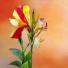 Canna pflanze ,Geeignet für grüne Pflanzen, die