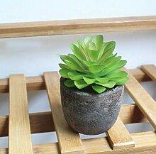 Casavidas 1 PC-Miniatur Sukkulenten Bonsai