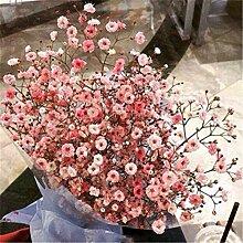 Casavidas 100Pcs Aromatische Gypsophila Samen Topf