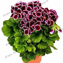 Casavidas 100pcs / bag Bonsai Geranium Garten