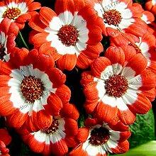 Casavidas 105pcs / pack 24 Farben Floristen