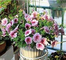 Casavidas 200 Samen/bag Petunia Pflanzen blühen