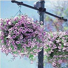 Casavidas 200 Samen/bag Pflanzen Petunia Climbing