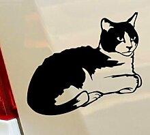Cat Kitty Blumen lustige Tiere Hobby Drift Funny Car Bumper Window Funny Vinyl Van Laptop Love Herz Decor Home Live Kids Funny Art Wand Aufkleber Aufkleber Motorräder