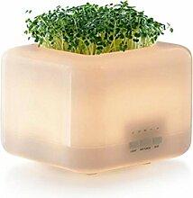 CCCREM Luftbefeuchter 500ML kann gepflanzt werden Aroma Maschine Anion Reinigung Time Stumm