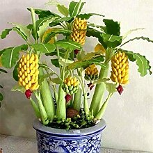 Ceanfly Banane Samen Mini Bonsai 10/20/30/50/100