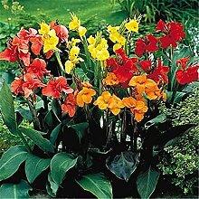 Charmful Beautiful Bulbs Hardy Atemberaubender,