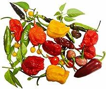 Chili-Samen Mix 20 Arten zu jeweils 10 Samen (200)