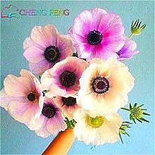 China Blumensamen 50/lot Anemone pulsatilla Samen