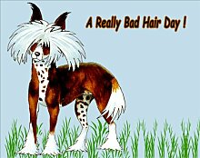 Chinese Crested Dog Fridge Magnet, Bad Hair Day by