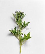 Chinesische Medizin Pflanze Kräutersamen Crocus sativus: Safrankrokus Samen einfach zu wachsen Home Garten Bodendecker + MysteryGif
