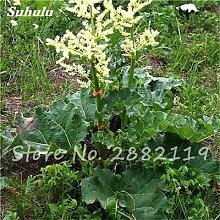 Chinesische Rhabarber Samen Nicht-GVO-Medizin Süße Gemüse Bonsai Pflanze Ziergarten Planta Semillars De Flores 100 PC-8