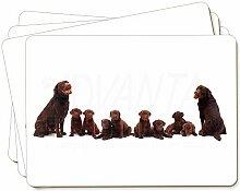 Chocolate Labrador Welpen Bild Tischsets in