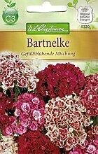 Chrestensen Bartnelke 'Gefülltblühende
