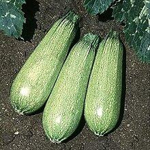 CHTING 100 Stück Zucchini Samen Dunkelgrün