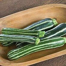 CHTING 100 Stück Zucchini Samen Einsteigersorte