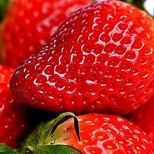 CHTING 100 STÜCKE Rote Erdbeersamen Garten