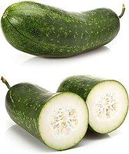CHTING 25 Stück Wintermelone Wachskürbis Samen