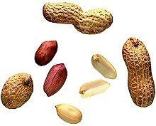 CHTING 50 STÜCKE Erdnusssamen Brauchen Nicht Viel