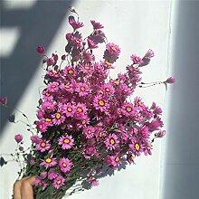 CHZIMADE getrocknete Blume Rudan Vogel natürlich