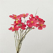 CHZIMADE Natürliche getrocknete Blume, Display