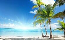 Consalnet Fototapete Sonniger Strand mit Palme,