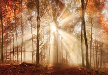 Consalnet Fototapete Sonniger Wald im Herbst,