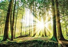 Consalnet Fototapete Sonniger Wald, Motiv B/L: