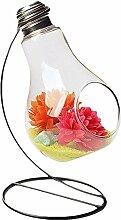 Cosanter Transparent Glühbirne Glasvase,