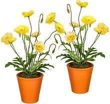 Creativ green Künstliche Zimmerpflanze, im