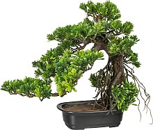 Creativ green Kunstbonsai Bonsai Podocarpus (1