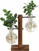 CTOBB Terrarium hydroponischen Pflanze Vasen
