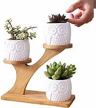 Cucheeky Sukkulenten-Übertopf aus Keramik,