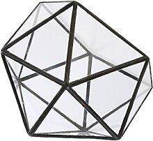D DOLITY Klare Geometrische Glas Terrarium