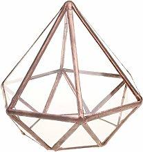 D DOLITY Transparente Geometrisches Glas Terrarium