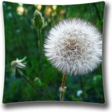 Dandelion After Rain Standard Size Design Square Pillowcase- Custom Pillowcase with Invisible Zipper in 16X16 inches AnasaC33622