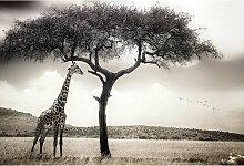 DD118923 Giraffe Safari Designwalls fototapete