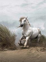 DD119076 White Wild Horse Designwalls fototapete