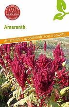 De Bolster 15040 Amaranth (Bio-Amaranthsamen)