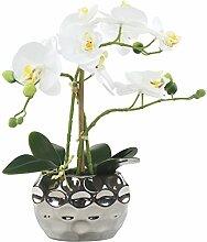 Decoline Künstliche Orchidee 33cm - Blüten weiß