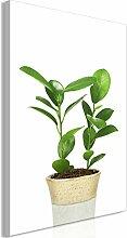 decomonkey Bilder Pflanzen 80x120 cm 1 Teilig